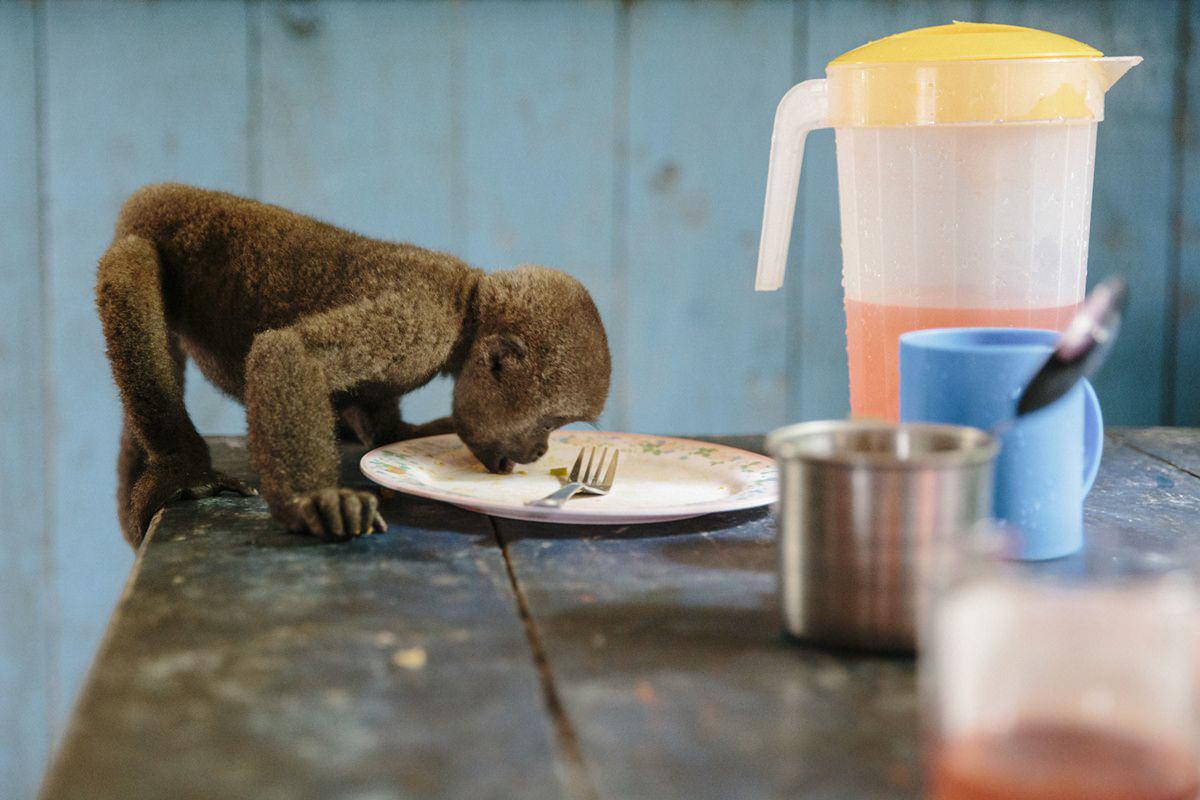 Foto eines Affen, der von einem Teller isst | Foto: Hanna Witte