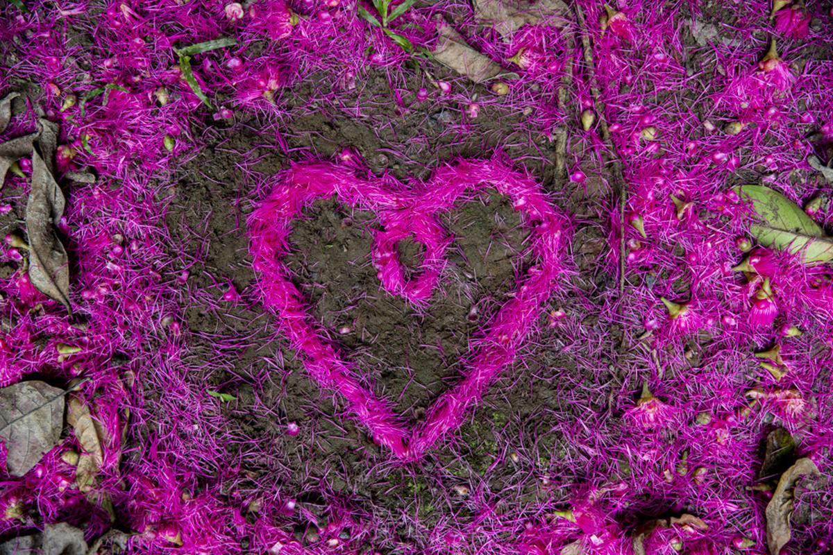 ein Herz aus lila Blüten im Regenwald von Ecuador | Foto von NGO Fotografin Hanna Witte
