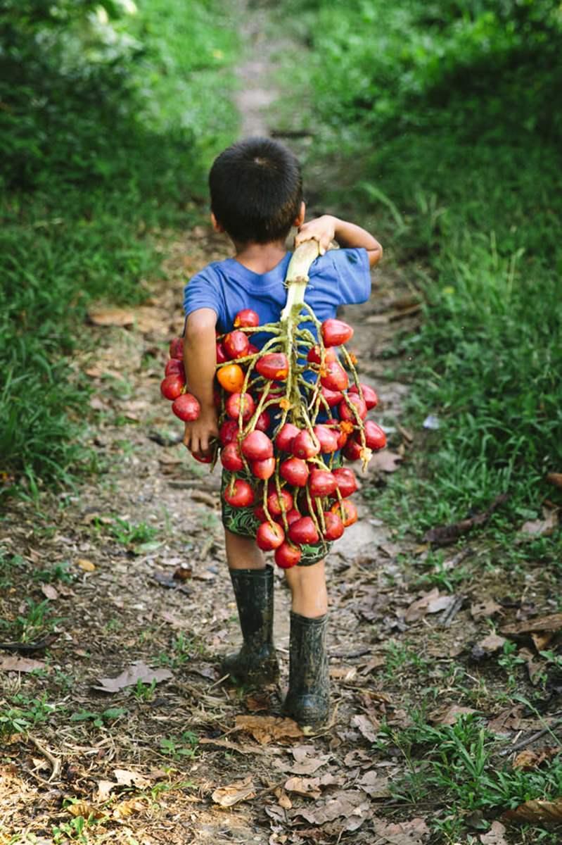 ein indigenes Kind trägt einem Ast voller Früchte | Foto von NGO Fotografin Hanna Witte
