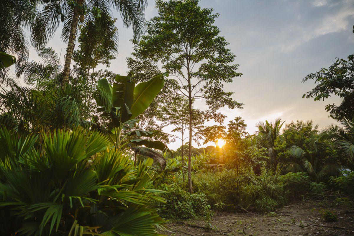 Regenwald im Amazonas Gebiet von Ecuador | Foto von NGO Fotografin Hanna Witte