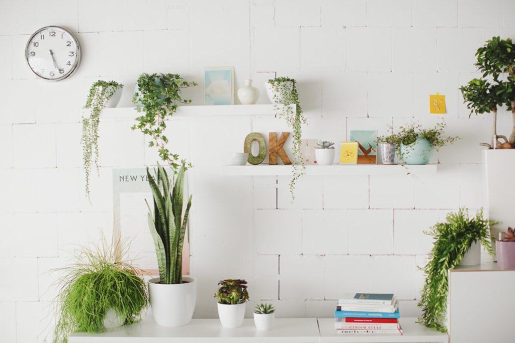 Foto einer Büroeinrichtung mit Regalbrettern, Grünpflanzen und Deko | Foto: Hanna Witte