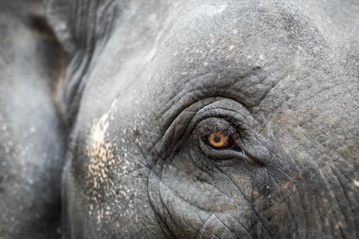 Nahaufnahme vom Auge eines Elefanten aus Indien | Foto: Hanna Witte