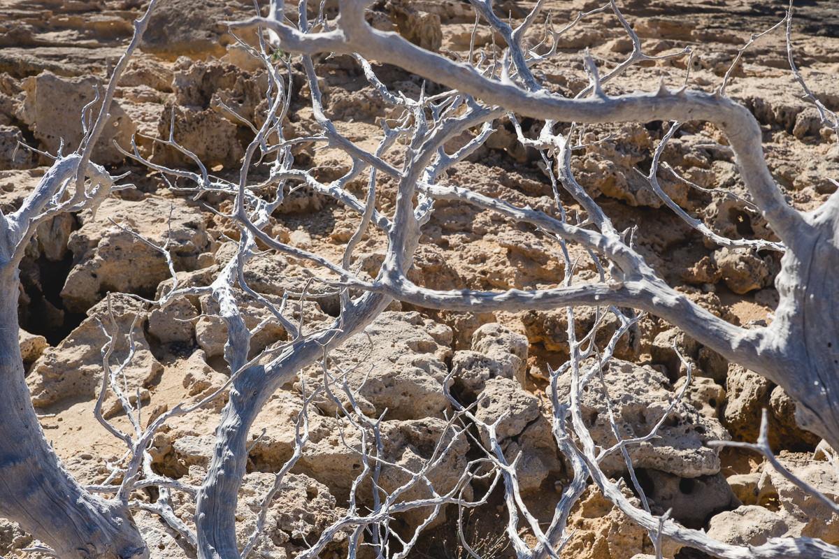 Äste eines blätterlosen Baums auf Kreta | Foto: Hanna Witte