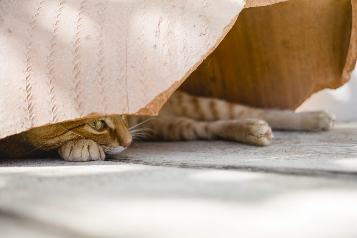 eine Katze schaut unter einer Decke hervor | Foto: Hanna Witte