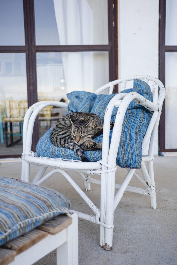 eine Katze schläft auf einem Stuhl | Foto: Hanna Witte