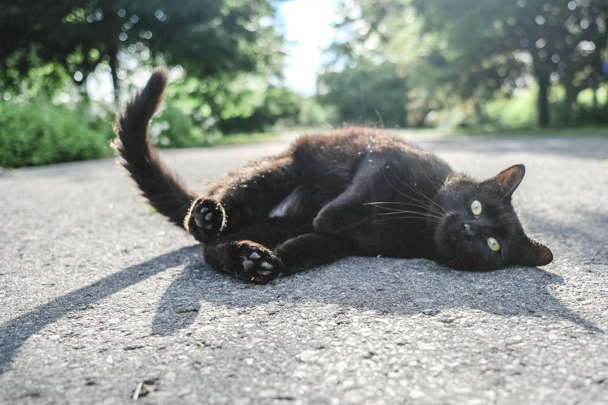 schwarze Katze auf einer Farm in Kanada