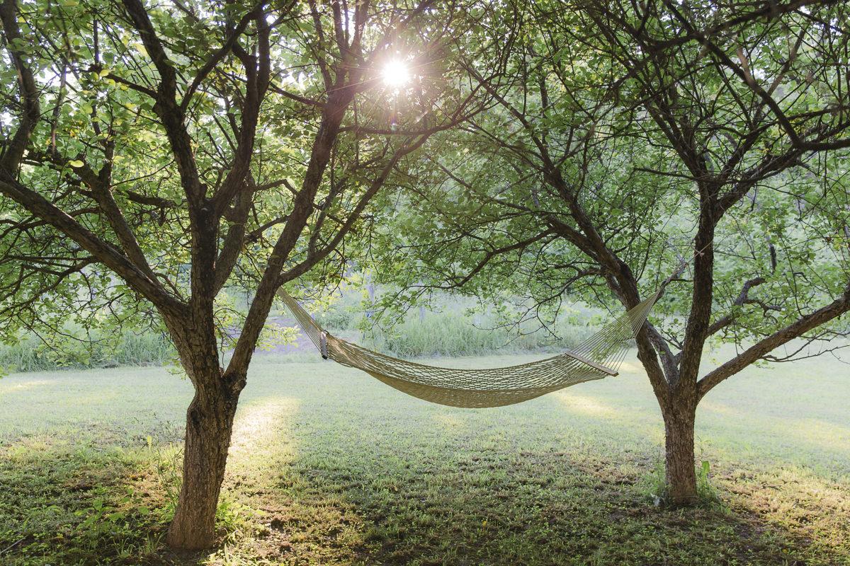 Hängematte zwischen zwei Bäumen auf dem Land in Kanada