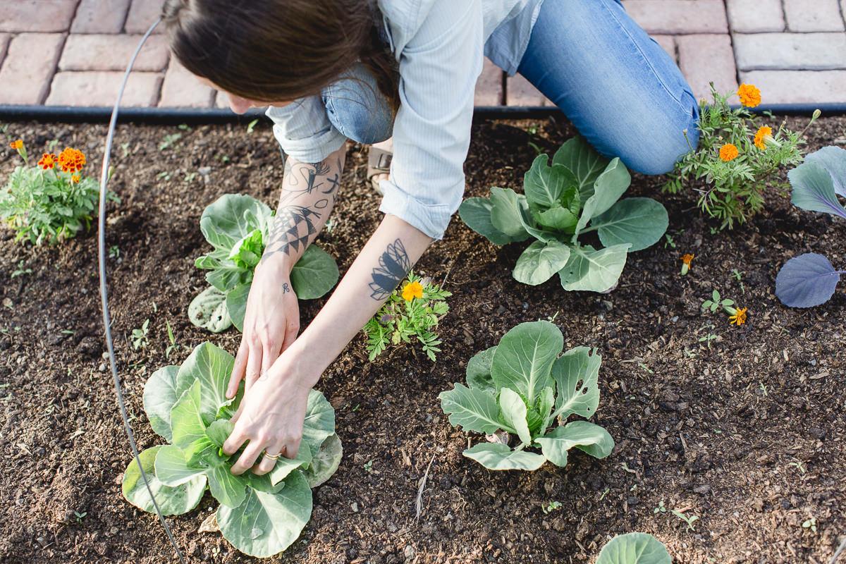 Liz Huntly bei der Ernte auf ihrer Farm in Kanada