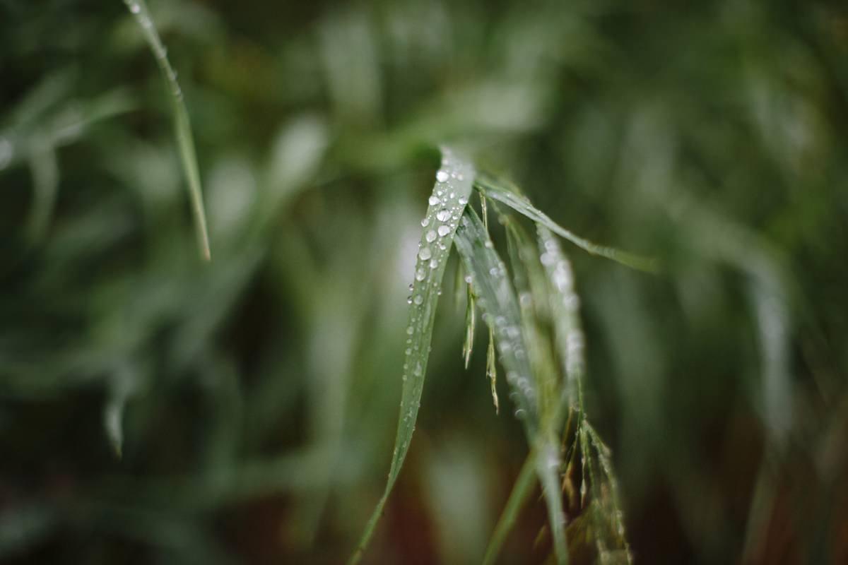 Nahaufnahme eines grünen Blatts mit Regentropfen