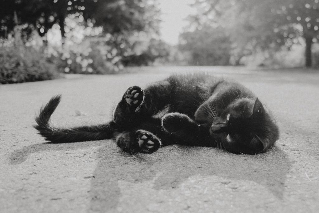 schwar-weiss Foto einer Katze, die gemütlich auf einer ruhigen Straße liegt
