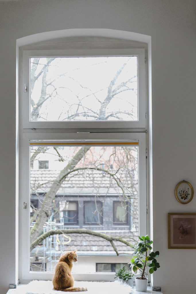eine braune Katze sitzt vor einem Fenster