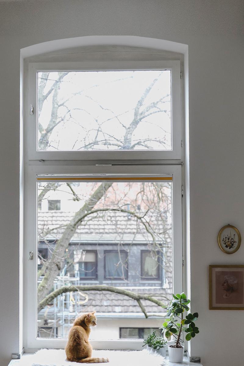 Tierfoto von einer roten Katze, die vor einem Fenster sitzt