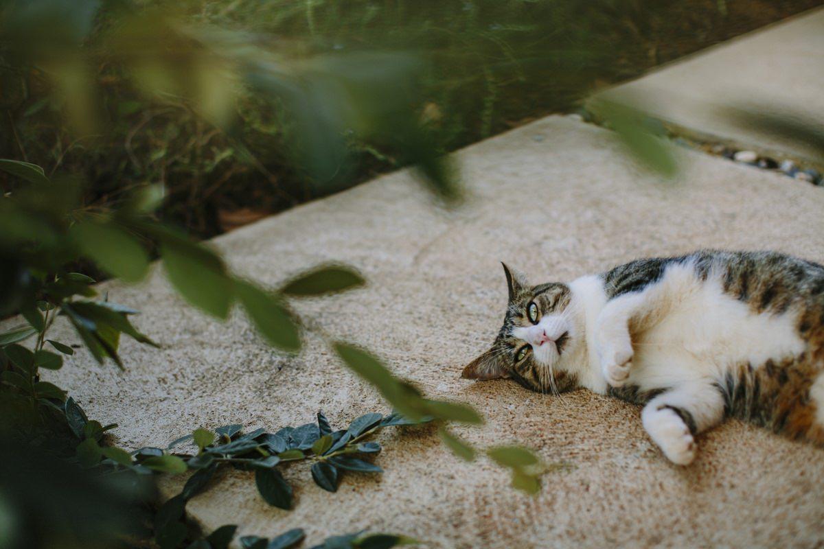 Foto einer Katze, die gemütlich auf einer Steinplatte liegt