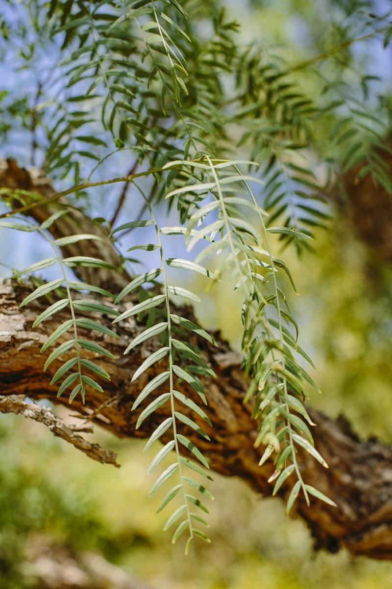 Foto von Blättern an einem Baum in Portugal