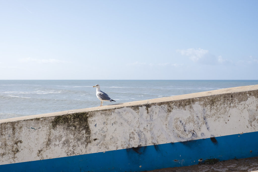eine Möwe sitzt auf einer Mauer vor dem Meer Portugals