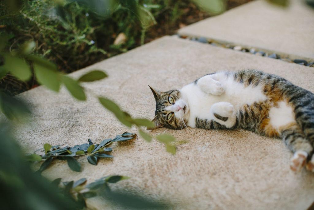 eine Katze macht es sich auf der Terrasse eines Yoga Retreats in Portugal gemütlich