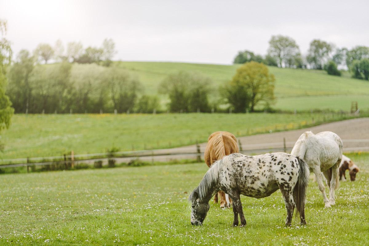 Ponys auf einer Wiese des Kinderhotels Ottonenhof im Sauerland | Foto: Hanna Witte
