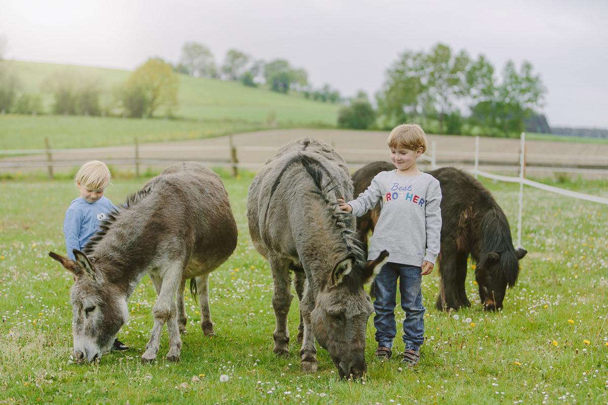 Kinder streichen Esel auf einer Wiese des Familienhotels Ottonenhof im Sauerland | Foto: Hanna Witte
