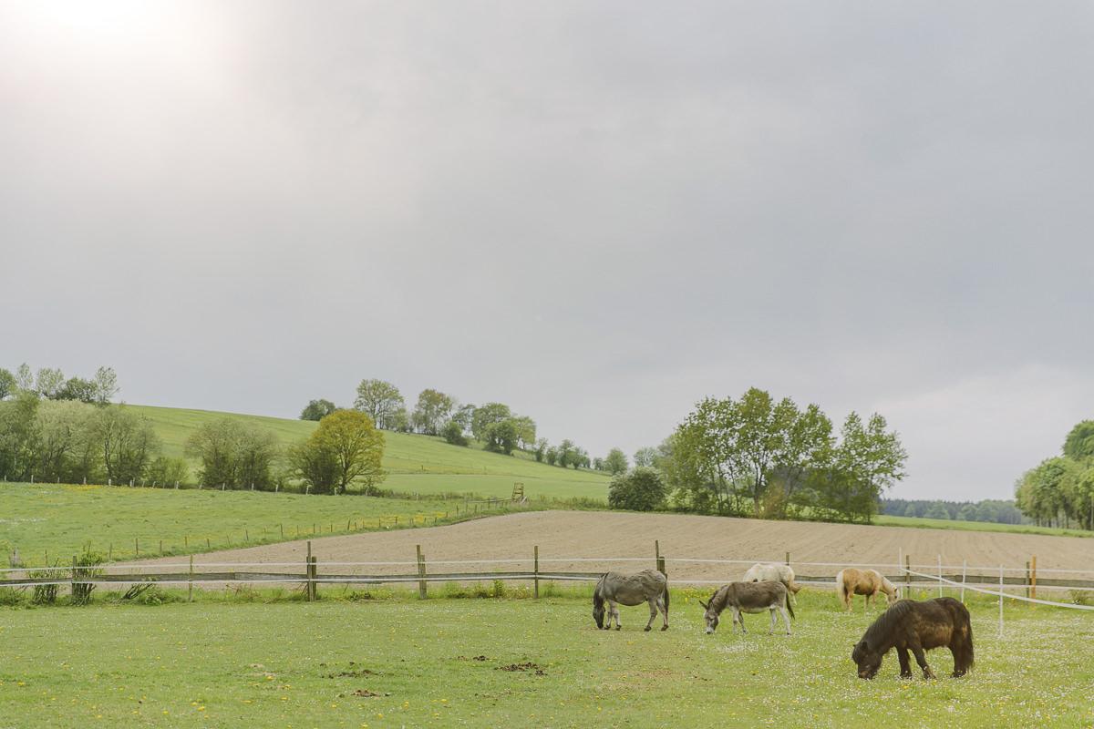 Familienhotel Foto von Ponys, die auf der Koppel des Ottonenhof im Sauerland grasen | Foto: Hanna Witte