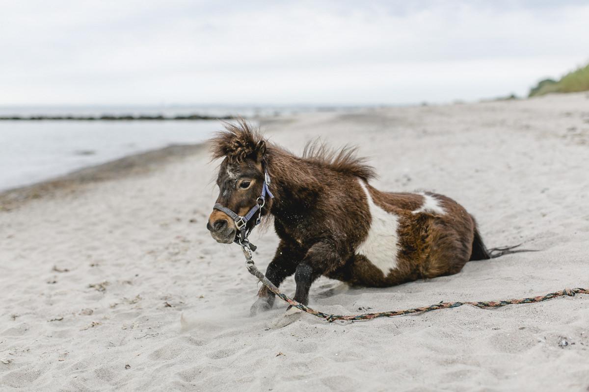 Foto von einem Pony am Strand der Ostsee | Foto: Hanna Witte