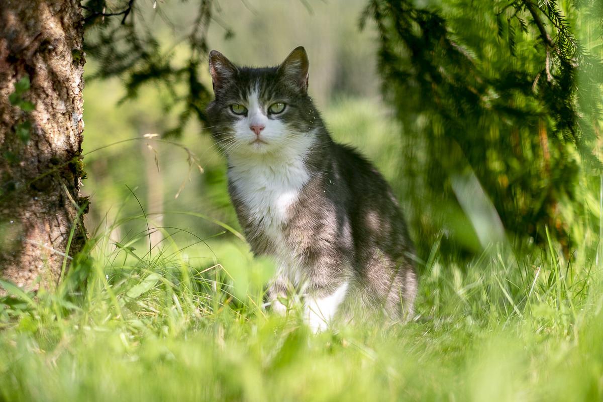 eine Katze in der Natur rund um das 3-Sterne Hotel Naturhof Stillachtal im Allgäu | Foto: Hanna Witte