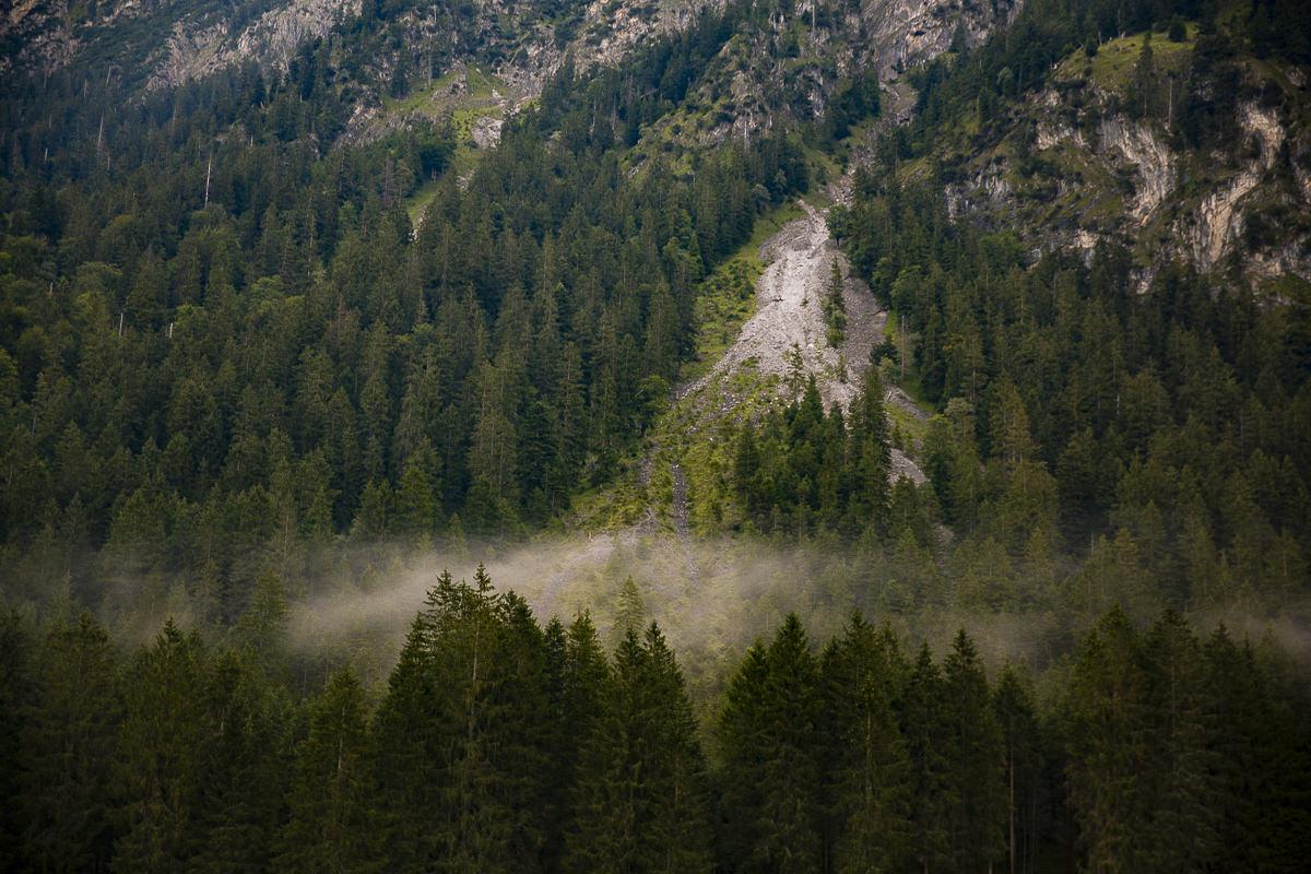 Naturbild von Bäumen im Allgäu | Foto: Hanna Witte