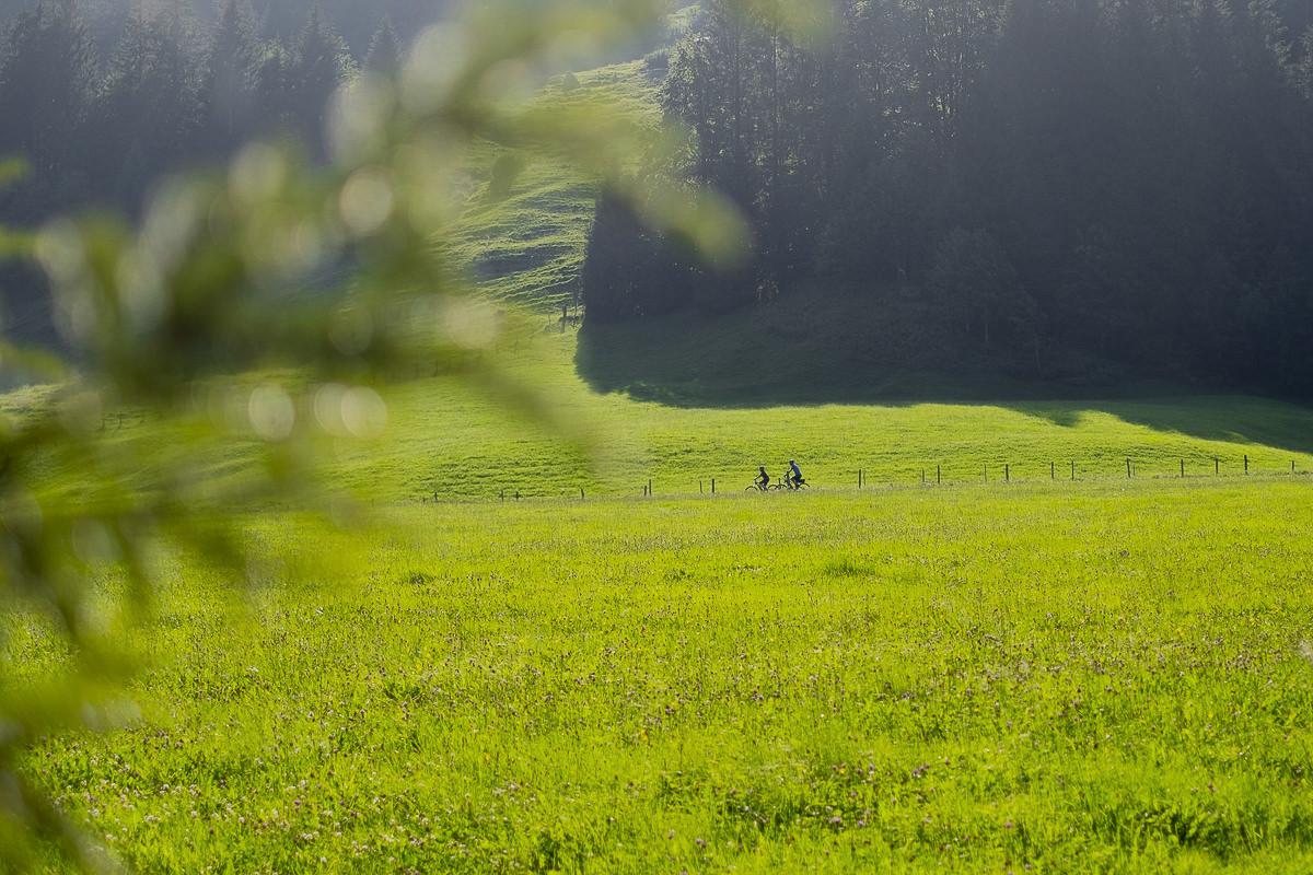 eine grüne Wiese im Allgäu | Foto: Hanna Witte