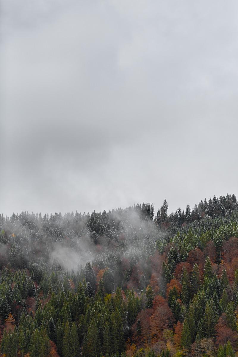 Nebel über den Baumwipfeln im Wettersteingebirge   Foto: Hanna Witte
