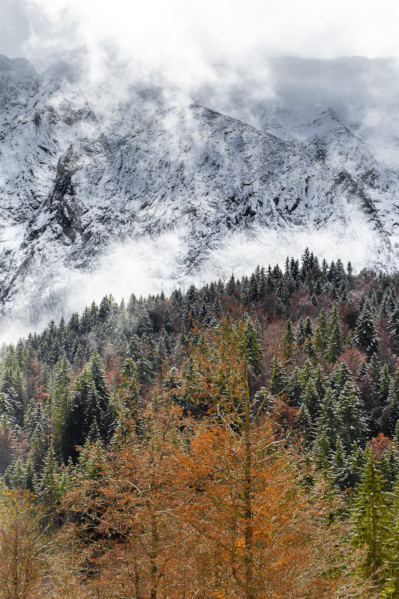 Baumwipfel vor einer verschneiten Bergkulisse im Wettersteingebirge   Foto: Hanna Witte