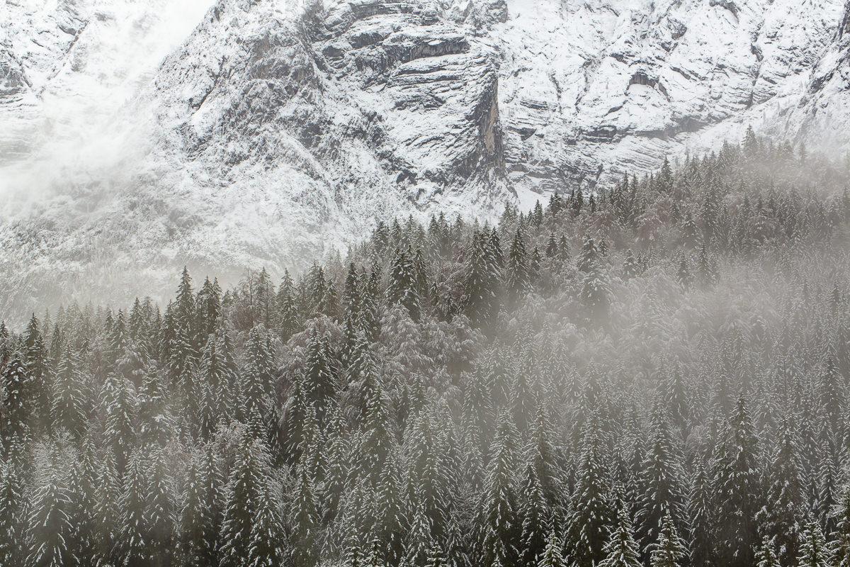 mit Schnee bedeckte Baumwipfel vor einer Bergkulisse in den Bayerischen Alpen   Foto: Hanna Witte