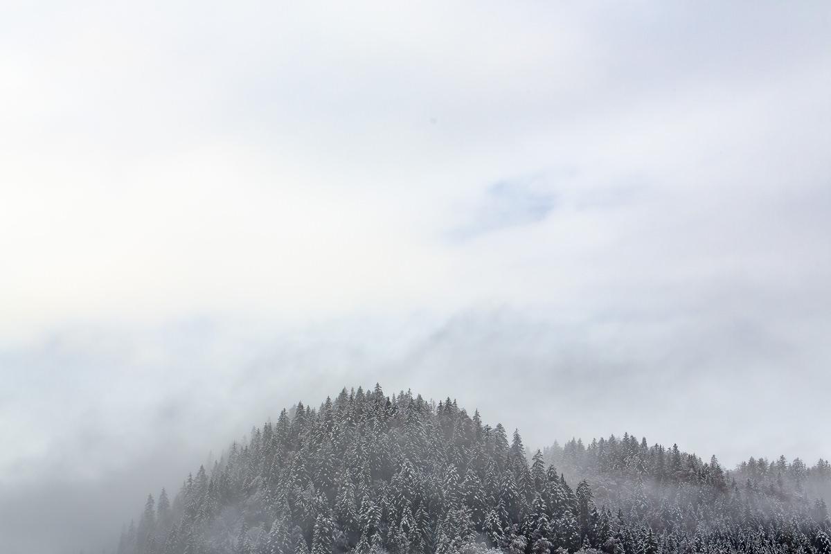 Naturfoto von verschneiten Baumwipfeln mit Nebel in den Bayerischen Alpen   Foto: Hanna Witte