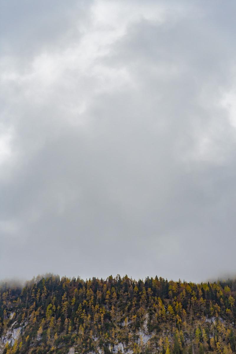 Naturfoto von Bäumen auf einem Hang unter einem Himmel voller Wolken   Foto: Hanna Witte