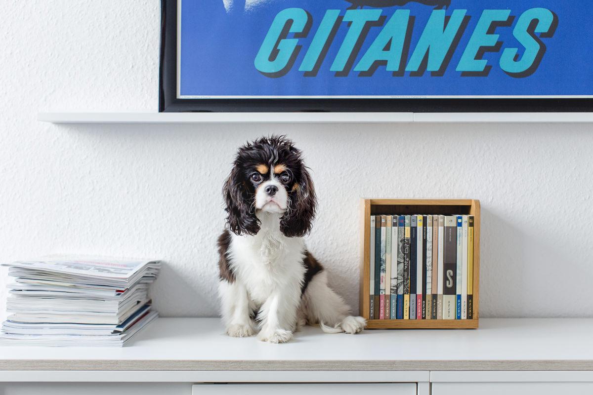 Imagefoto Agenturhund der Fundraising Agentur Fundango aus Köln   Foto: Hanna Witte