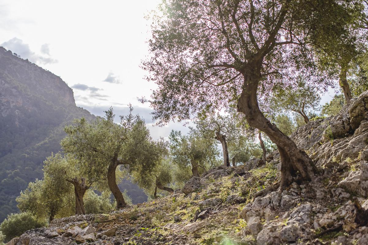 raue Landschaft mit wilder Natur im Tramuntana Gebirge auf Mallorca | Foto: Hanna Witte