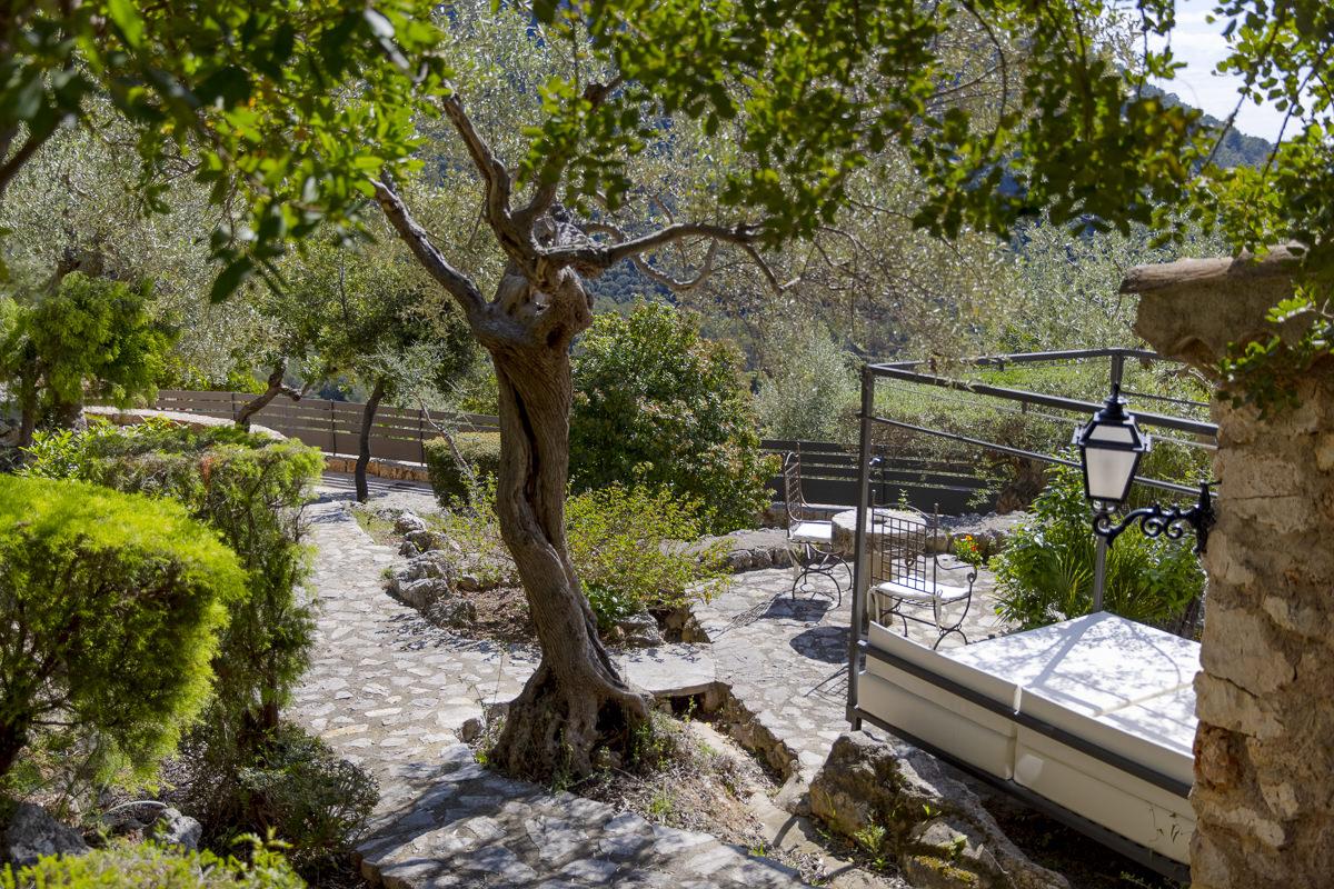 Außenterrasse mit wunderschönem Baum bei der Finca Albellons auf Mallorca | Foto: Hanna Witte