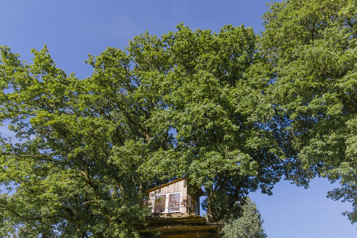 ein Baumhaus in einem riesigen grünen Baum auf dem Ulliwood Gelände | Foto: Hanna Witte