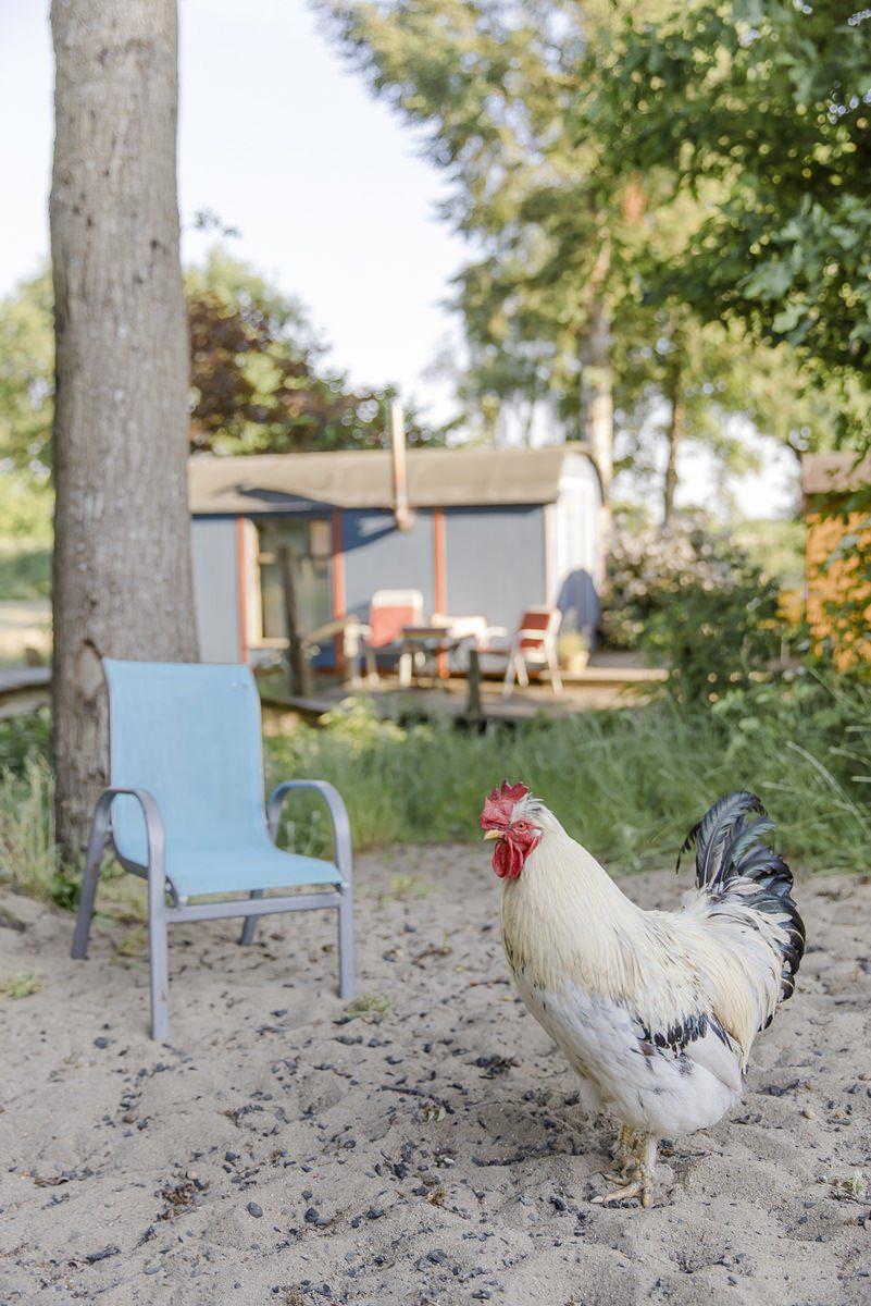 ein Huhn auf dem Ulliwood Hof in Bokel | Foto: Hanna Witte